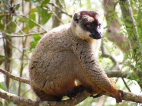 i-lemuri-dell-est-4