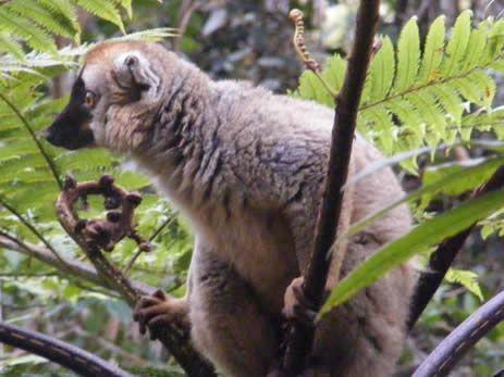 i-lemuri-dell-est-9